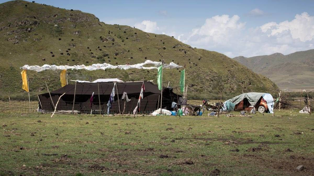 中共限制使用草场,西藏兴海县牧民陷入维持生计困境